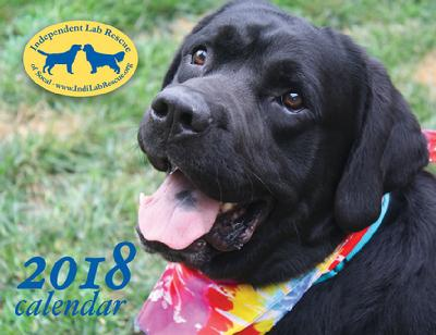 Lab Rescue Of Southern California